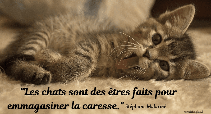 citation chat caresse
