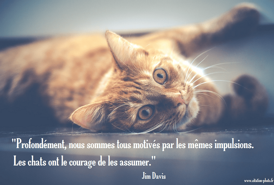 citation chat courage assumer impulsion
