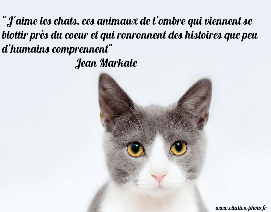 Citation j'aime les chats