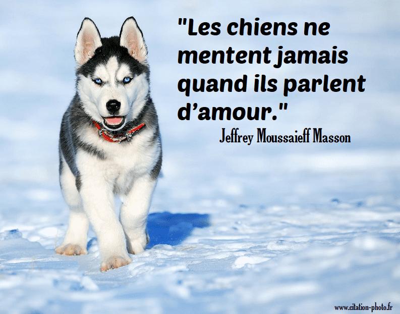Citations Sur Le Chien En Images