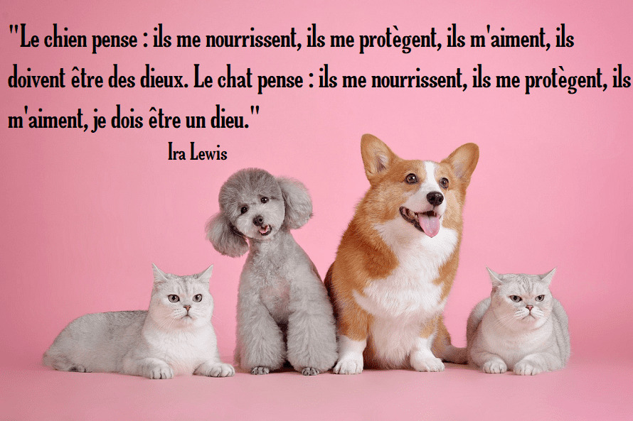 chat chien dieu citation