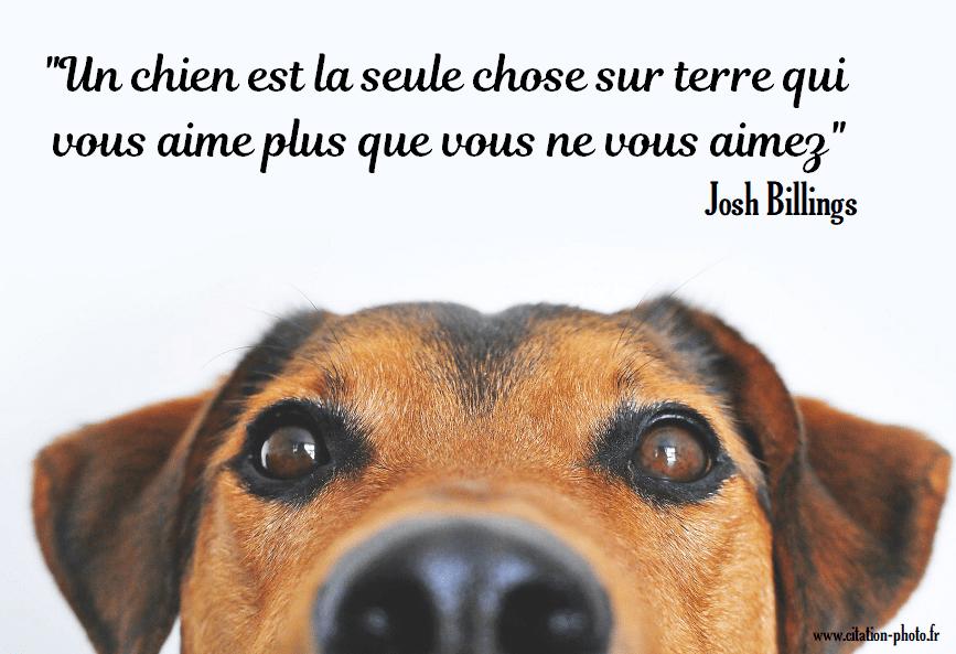 http://www.citation-photo.fr/img/chien/image-chien-meilleure-chose-sur-terre.png